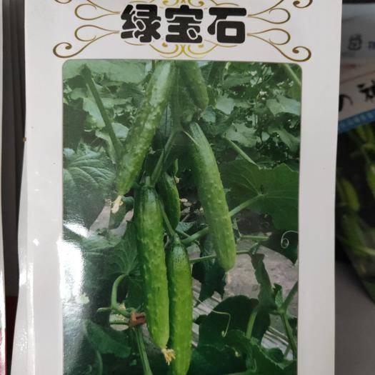 吉林省通化市梅河口市黄瓜种子 绿宝石