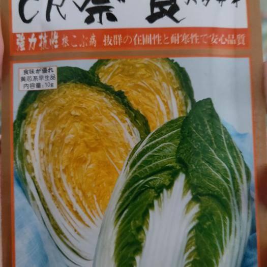 吉林省通化市梅河口市白菜种子 奈良