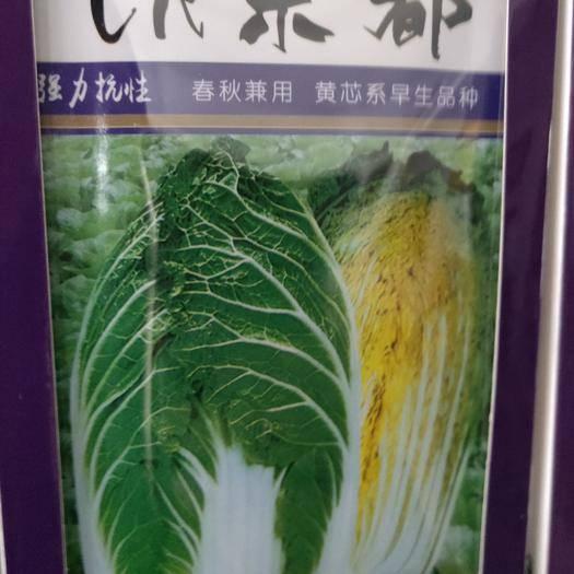 吉林省通化市梅河口市大白菜种子 京都