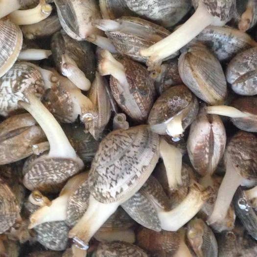 江苏省连云港市海州区 新鲜冷冻花甲蛤蜊,3斤装,通货混装
