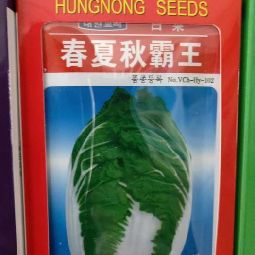 吉林省通化市梅河口市白菜种子 韩国大白菜