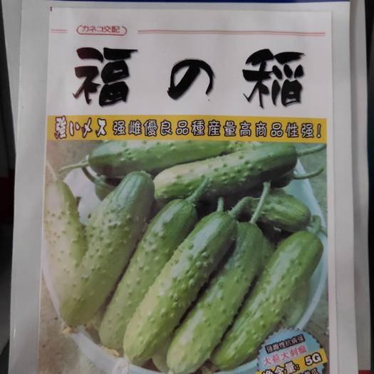 吉林省通化市梅河口市黄瓜种子 日本黄瓜