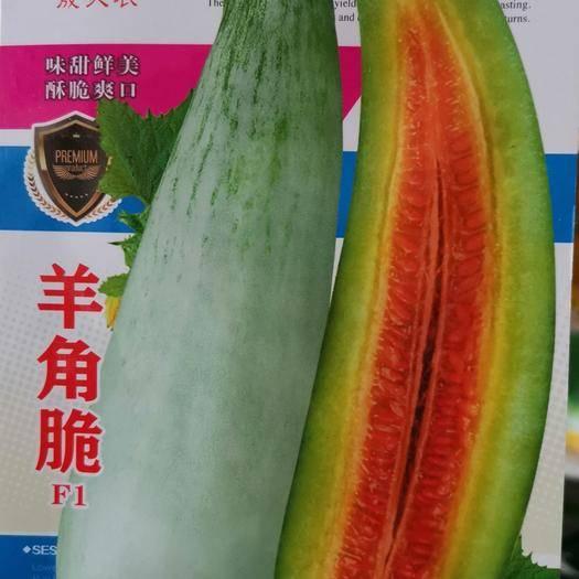 河南省商丘市夏邑县 羊角脆甜瓜种子
