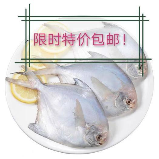 山东省潍坊市安丘市 海捕银鲳鱼肉多鲜嫩批发包邮