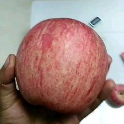 陕西省咸阳市乾县红富士苹果 70mm以上 条红 纸+膜袋