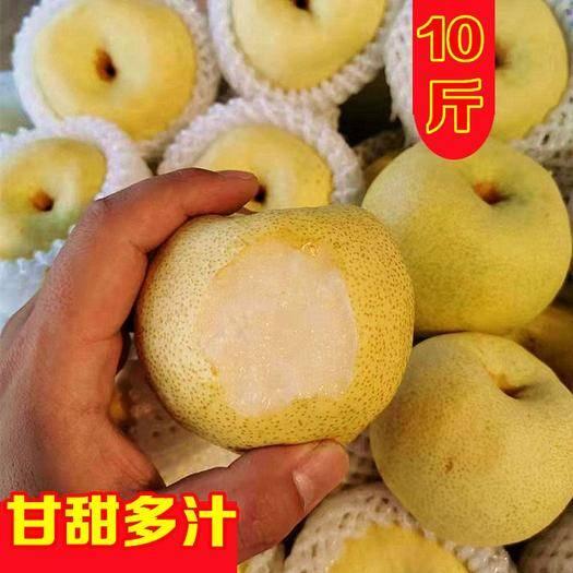 江苏省徐州市云龙区 砀山梨子10斤新鲜水果白酥梨5斤百年梨树非皇冠梨青梨整箱包