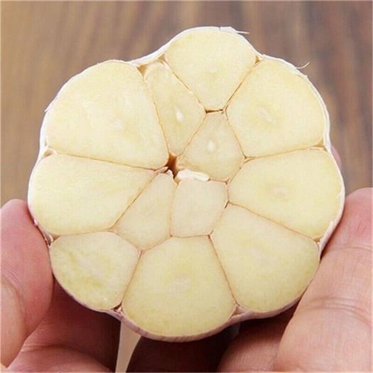 广东省汕尾市城区白皮大蒜 农家3斤包邮紫白皮新干蒜