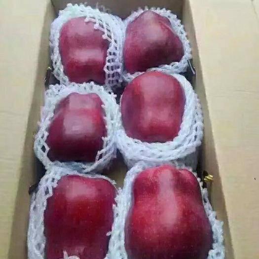 甘肃省天水市麦积区 花牛苹果