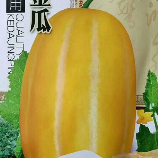 河南省商丘市夏邑县 (露地专用)黄金瓜甜瓜种子 果肉味甜多汁 抗病性强