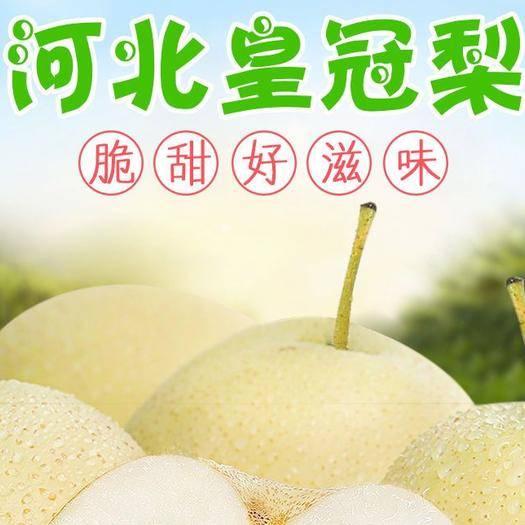 河北省石家庄市正定县 河北皇冠梨精品黄冠梨子新鲜水果产地直发脆甜多汁多规格可选