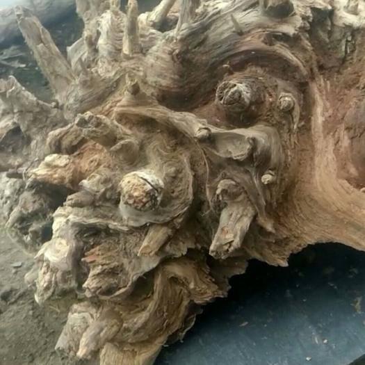 吉林省延边朝鲜族自治州安图县 琥珀木原料