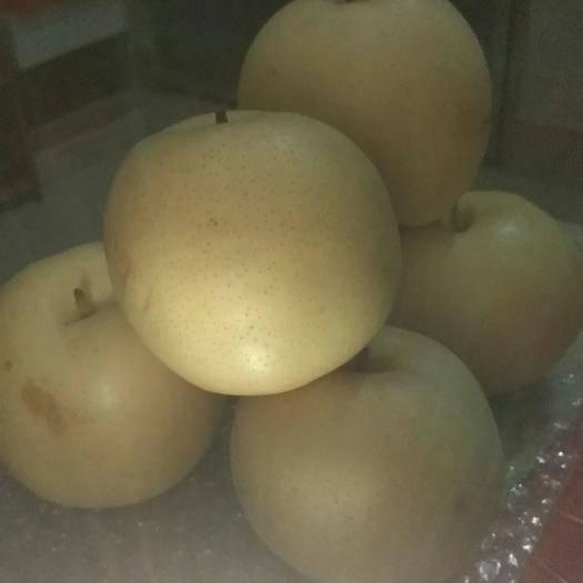河南省南阳市邓州市 黄金梨,品相好,有机肥,糖度9-15%  2-3元