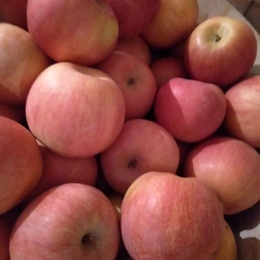 辽宁省葫芦岛市绥中县红富士苹果 75mm以上 条红 纸+膜袋