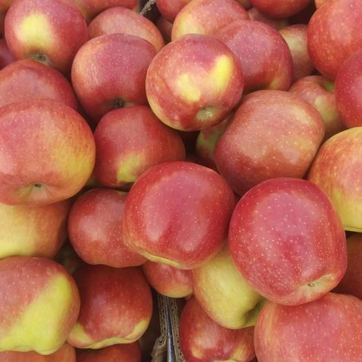 寧夏回族自治區銀川市興慶區紅元帥蘋果 色澤鮮亮,口感極佳,自產自銷的,