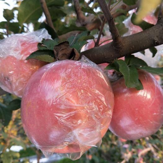 山西省運城市臨猗縣冰糖心蘋果 山西紅富士冰糖心脆甜多汁自家種植綠色無污染