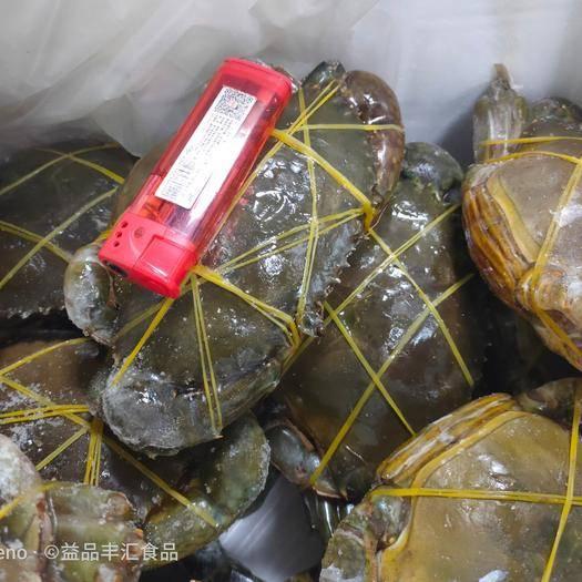 广东省广州市荔湾区 膏蟹 青蟹 每只带膏 6两-1斤/只