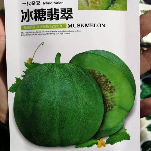 河南省商丘市夏邑县 冰糖翡翠甜瓜种子