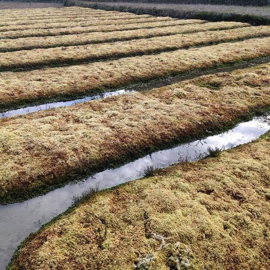 湖南省邵阳市隆回县 有优质水苔供应,需要的老板欢迎下单