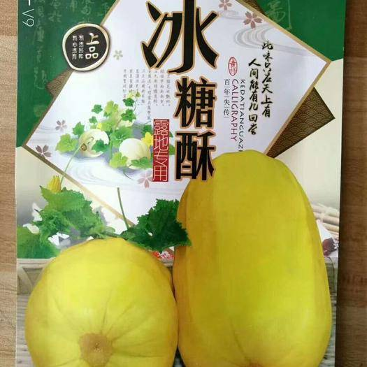 河南省商丘市夏邑县 (百年失传)冰糖酥甜瓜种子 酥脆香甜可口 抗病高产卖价高