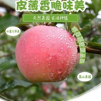 【壞果包賠】脆蘋果水果新鮮紅富士蘋果整箱5/10斤冰糖心丑