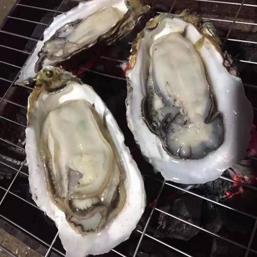 广东省潮州市饶平县井州牡蛎 一手货源,批发零售