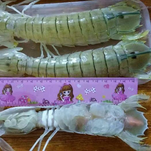 广西壮族自治区北海市海城区 皮皮虾,冰鲜虾姑,生猛爬爬虾