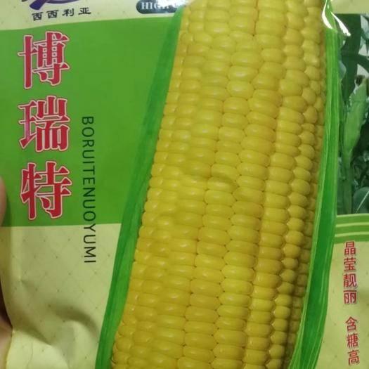 河南省商丘市夏邑县 博瑞特黄糯玉米种子