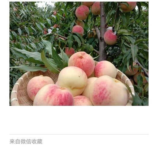 陜西省寶雞市扶風縣白雪紅桃 扶風特產雪桃基地生產