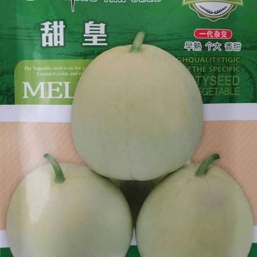 河南省商丘市夏邑县 一代杂交甜皇甜瓜种子早熟个大香甜高圆形皮薄肉脆汁甜