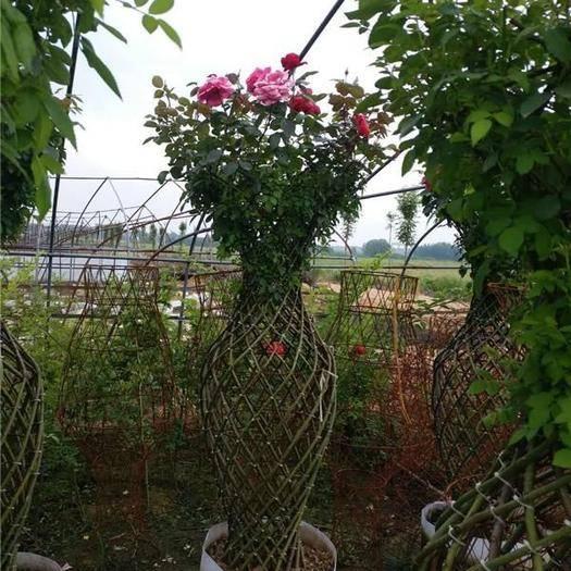 河南省南阳市方城县 新款月季花瓶造型树花瓶骨架制作