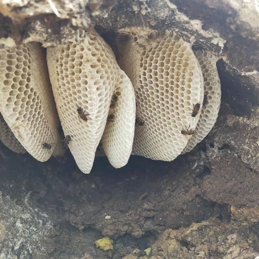云南省临沧市耿马傣族佤族自治县 自己家养的蜂蜜没有任何添加剂,纯花蜜。