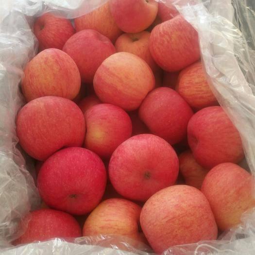 寧夏回族自治區中衛市沙坡頭區 寧夏中衛市南山臺純正的冰糖芯蘋果,系列:紅富士,條紋片紅都有
