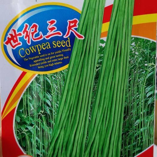 河南省商丘市夏邑县 世纪三尺豆角种子