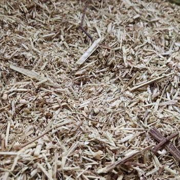 中药材青蒿 青蒿粗粉可做生物肥料和植物肥料。