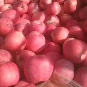 甘肅省平涼市靜寧縣 靜寧蘋果紅富士蘋果