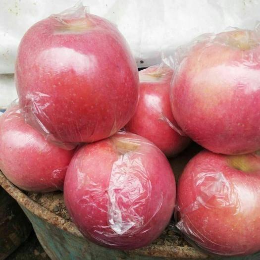 陜西省咸陽市禮泉縣 陜西禮泉紅富士蘋果個大,色澤均勻紅潤有光澤,口感脆甜,