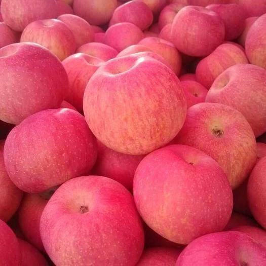 年货山东苹果 红富士苹果产地直销 提供人工分拣包装装车找车等