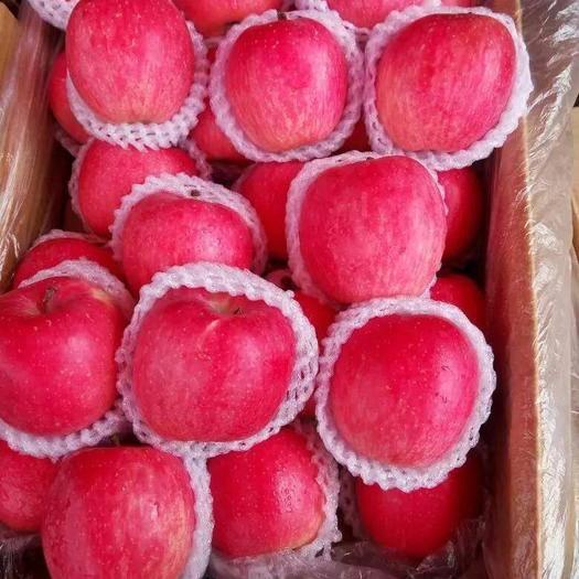 甘肅省平涼市靜寧縣 靜寧蘋果冷庫貨大量出庫帶包裝,包上車