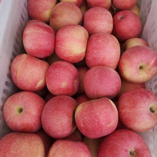 河北省石家莊市晉州市紅富士蘋果 精選紅富士萬畝果園產地直銷新鮮脆甜常年供應貨源充足年后發貨