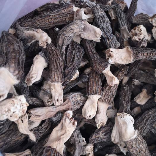安徽省宿州市碭山縣羊肚菌 干貨