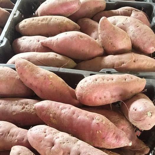 海南省澄邁縣澄邁縣高系14號紅薯 海南澄邁橋頭富硒地瓜批發  一件代發 板栗薯基地直供