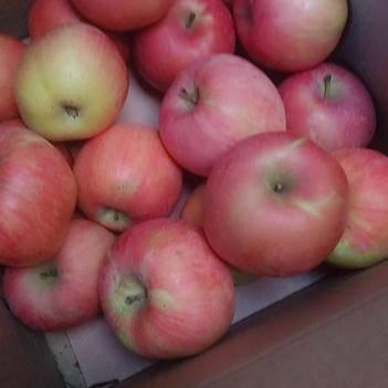 10斤整箱甘肅慶陽高海拔糖心優質紅富士蘋果脆甜禮盒裝包郵