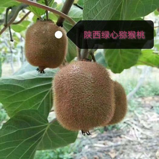 陕西省西安市周至县 陕西绿心猕猴桃绿心奇异果新鲜应季水果非红心猕猴桃当季大果5