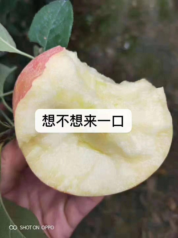 紅富士蘋果 80一下精品果