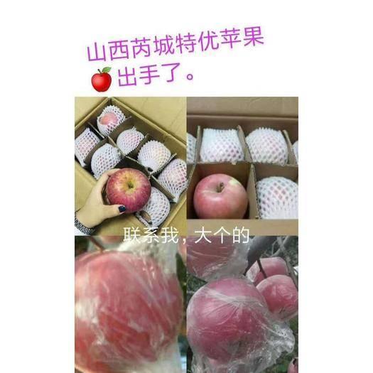 山西省運城市臨猗縣紅富士蘋果 95mm以上 條紅 紙+膜袋
