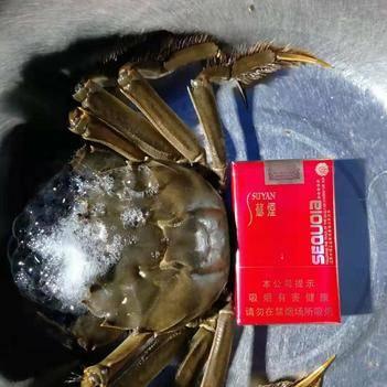 興化大閘蟹產源地質量優規格硬,大年初五發