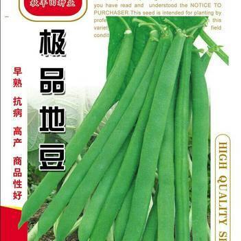 豆角种子 地豆种子