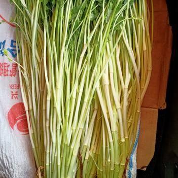 纯正山泉水种植水芹菜