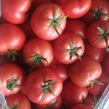 平度西红柿大量上市中