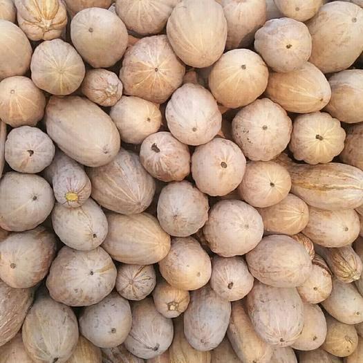 安徽省阜陽市界首市蜜本南瓜 4~6斤